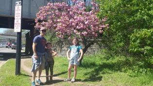 CherryBlossomsInDC