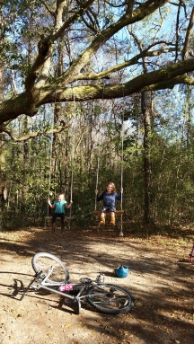 Swings in the forest