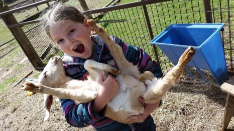 Baby goats rule.