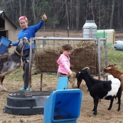 Time to feed the goats.