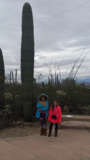 That's one big cactus.