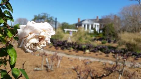 Plantation Rose Garden