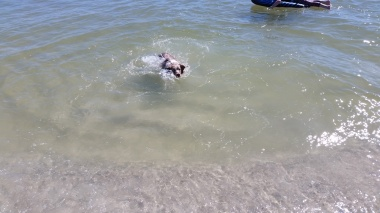 Sydney's first swim