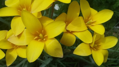 VeryYellowFlowers