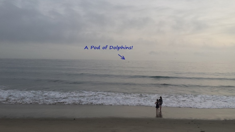 malibudolphins