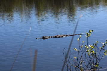 Creepy Gator