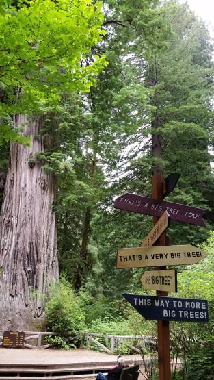 BigTreeAndRedwoodsSigns