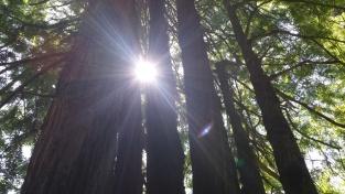 EwoksTrees