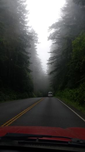 Highway1Redwoods
