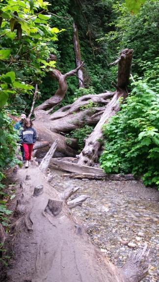 HikingFernValley