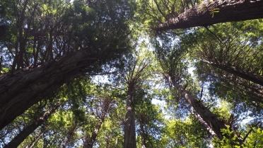 IncrediblyTallTrees