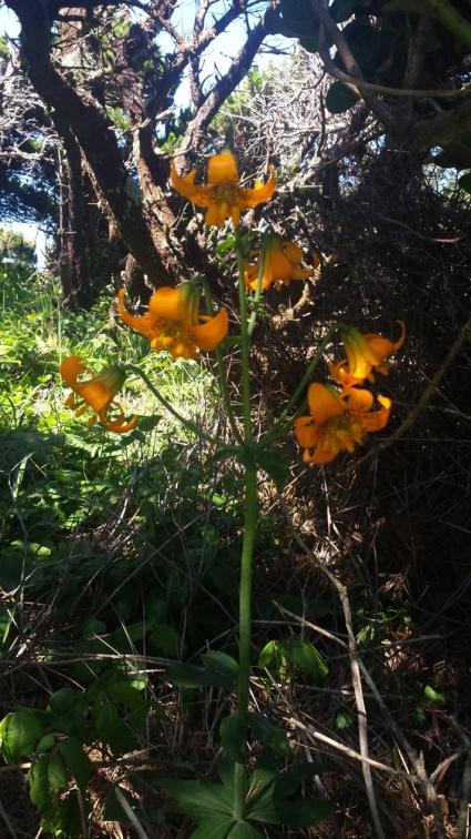 OrangeYellowFlowersORCoast