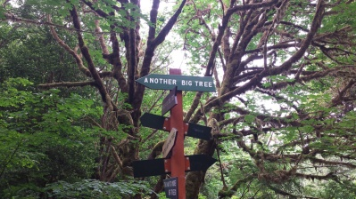RedwoodFunnySigns1