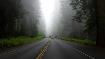 RedwoodsHighwayFog