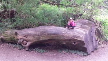 RedwoodsMeditation