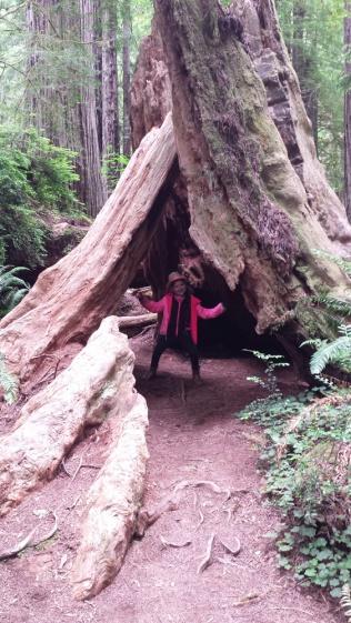 RedwoodsTreeFort