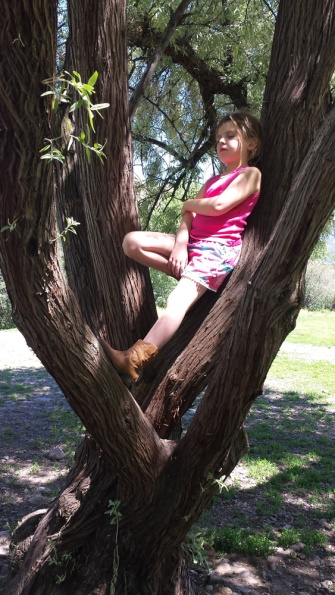 TreeSleeping